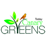 Today Homes Canary Greens