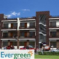 Evergreen Gardenia