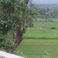 Shivalik Hills - Dehradun