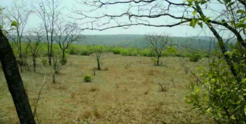 Agricultural/Farm Land for Sale in Rajapur, Ratnagiri - 100 Acre