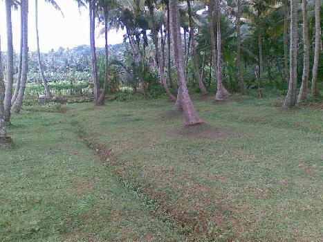 3 Ares Commercial Land for Sale in Kollankodu, Kanyakumari