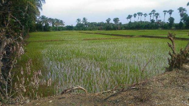 22 Ares Farm Land for Sale in Vandavasi, Chennai