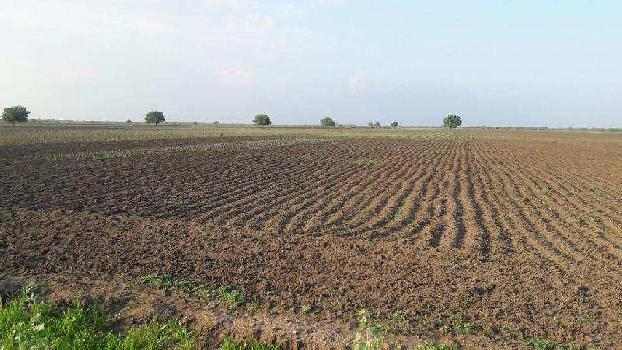 3000 Acre Farm Land for Sale in Sundaravelpuram, Thoothukudi