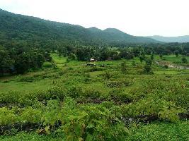 Farm Land for sale in Tirunelveli   Buy/Sell Agricultural Farm Land