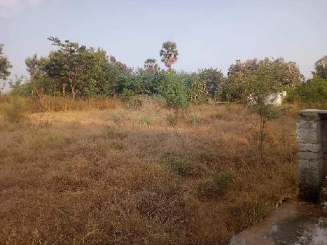 11 Acre Farm Land for Sale in Rajapalayam, Virudhunagar