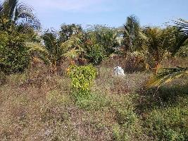 63 Acre Farm Land for Sale in Tenkasi, Tirunelveli