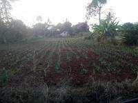 Farm Land for sale in Visakhapatnam | Buy/Sell Agricultural
