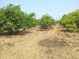 6.50 Acre Farm Land for Sale in Malwan, Sindhudurg