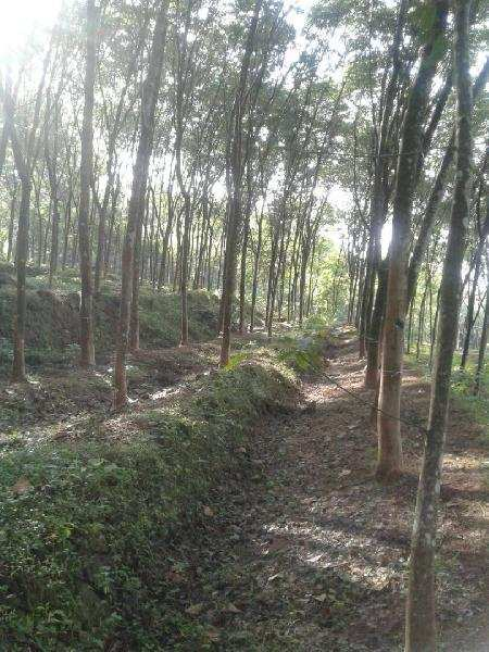 Farm Land for Sale in Kerala - 1 Hectares