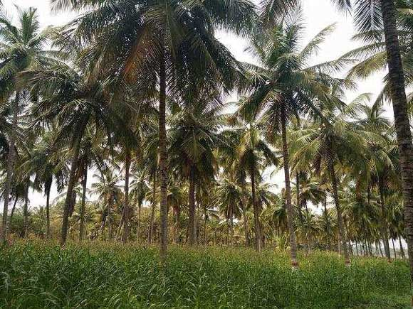 Agricultural/Farm Land for Rent in Nanjungud Road, Mysore - 15 Acre