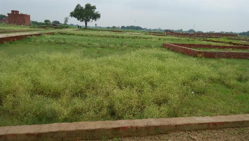 Residential Plot for Sale in Ghazipur - 1000 Sq.ft.