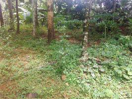 25 Cent Residential Plot for Sale in Calicut Suburb, Kozhikode