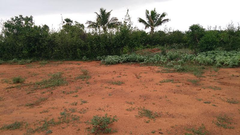 Agricultural/Farm Land for Sale in Rajapalayam, Virudhunagar - 48 Cent