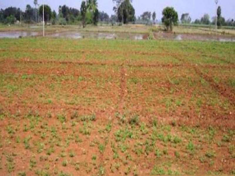 Commercial Lands /Inst. Land for Sale in Shanti Nagar, Bangalore - 14000 Sq. Feet