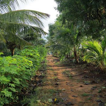 17 Cent Commercial Land for Sale in Madampatti, Coimbatore