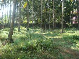 40 Cent Residential Plot for Sale in Vadakkencherry, Palakkad