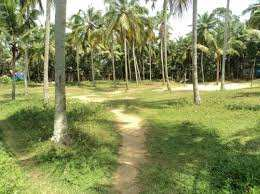 5 Acre Residential Plot for Sale in Alathur, Palakkad
