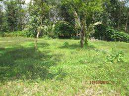 20 Cent Residential Plot for Sale in Alathur, Palakkad