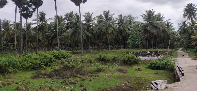 Farm Land for Sale in Pollachi, Coimbatore