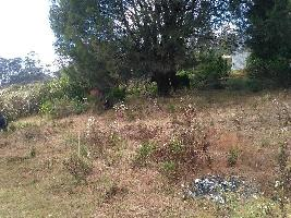 25 Cent Residential Plot for Sale in Lovedale Junction, Ooty