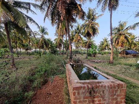6 Acre Farm Land for Sale in Sira, Tumkur Turuvekere
