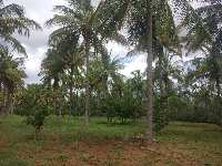 4 Acre Farm Land for Sale in Doddaballapur, Bangalore