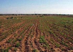 20 Bigha Farm Land for Sale in Kuldhara, Jaisalmer