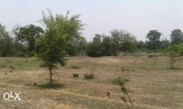 42 Acre Farm Land for Sale in Amanaka, Raipur