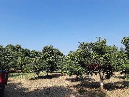 8 Acre Farm Land for Sale in Pardi, Vapi