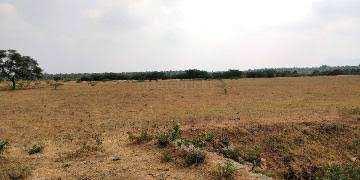 6 Acre Farm Land for Rent in Kuntloor, Hyderabad