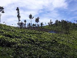 9 Acre Farm Land for Sale in Kotagiri, Ooty