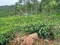 Farm Land for sale in Nilgiris | Buy/Sell Agricultural Land