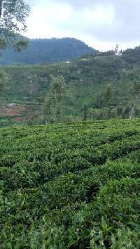 17.75 Acre Farm Land for Sale in Kotagiri, Ooty