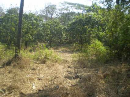 Residential Land / Plot for Sale in Calangute - 1300 Sq. Meter