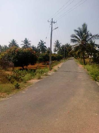 3 Acre Farm Land for Sale in Hoskote, Bangalore