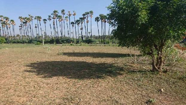 14170 Sq.ft. Farm Land for Sale in Tiruchengode, Namakkal