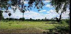 350 Cent Farm Land for Sale in Tirupathur, Sivaganga