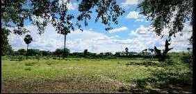 3 Acre Farm Land for Sale in Tirupathur, Sivaganga