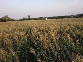 2 Bigha Farm Land for Sale in Palitana, Bhavnagar