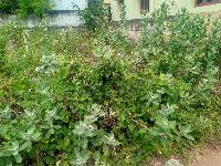 2 Cent Residential Plot for Sale in Tenkasi, Tirunelveli