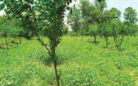 8 Cent Commercial Land for Rent in Thiruvamkulam, Kochi