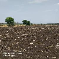 11 Acre Farm Land for Sale in Karmala, Solapur