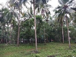 36 Cent Residential Plot for Sale in Perinthalmanna, Malappuram