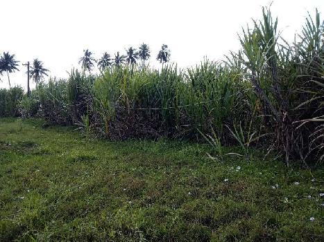 1 Acre Farm Land for Sale in Machilipatnam, Krishna