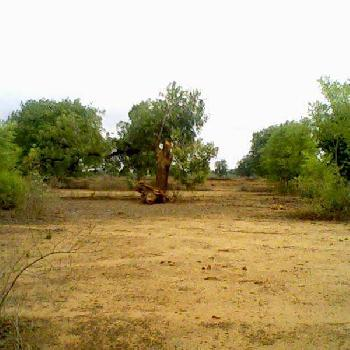 1070 Sq.ft. Residential Plot for Sale in Talawali Chanda, Indore