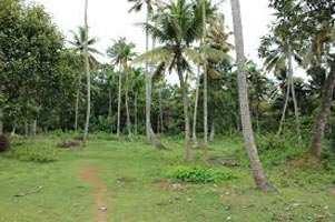 18 Cent Residential Plot for Sale in Karaparamba, Kozhikode