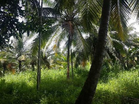 6 Acre Farm Land for Sale in Ponnani, Malappuram