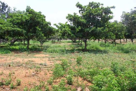 2 BHK 200 Sq. Yards Farm House for Sale in Thimmapur, Hyderabad