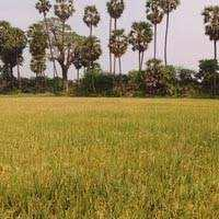 Farm Land for sale in Karnal | Buy/Sell Agricultural Land in