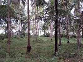 2 Acre Commercial Land for Sale in Pavangad, Kozhikode